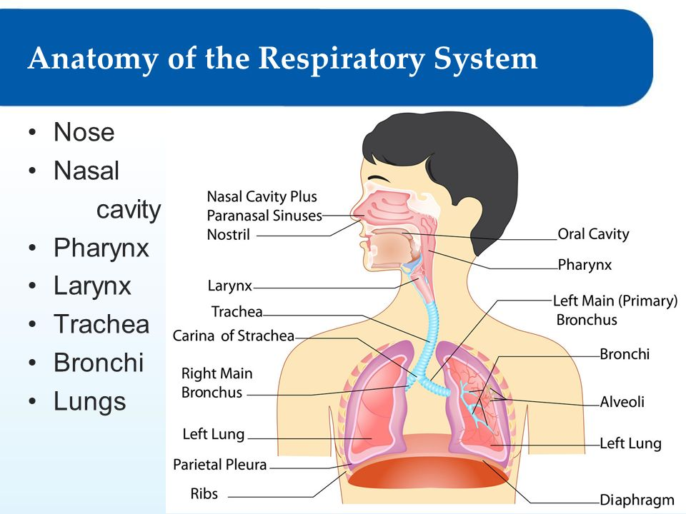 Respiratory System 9 Lesson 91 Functions Anatomy Lesson 92