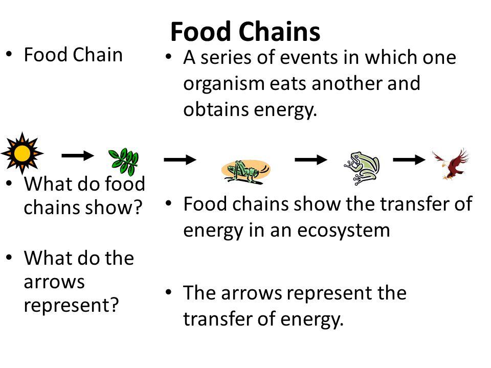 3 food chains