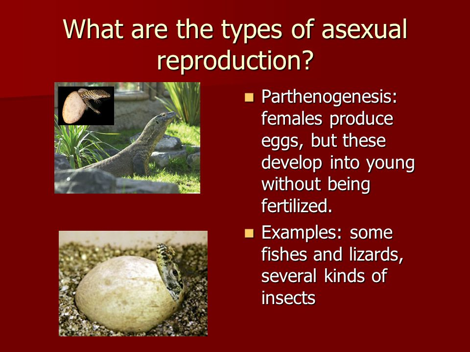 Difference parthenogenesis and asexual reproduction definition