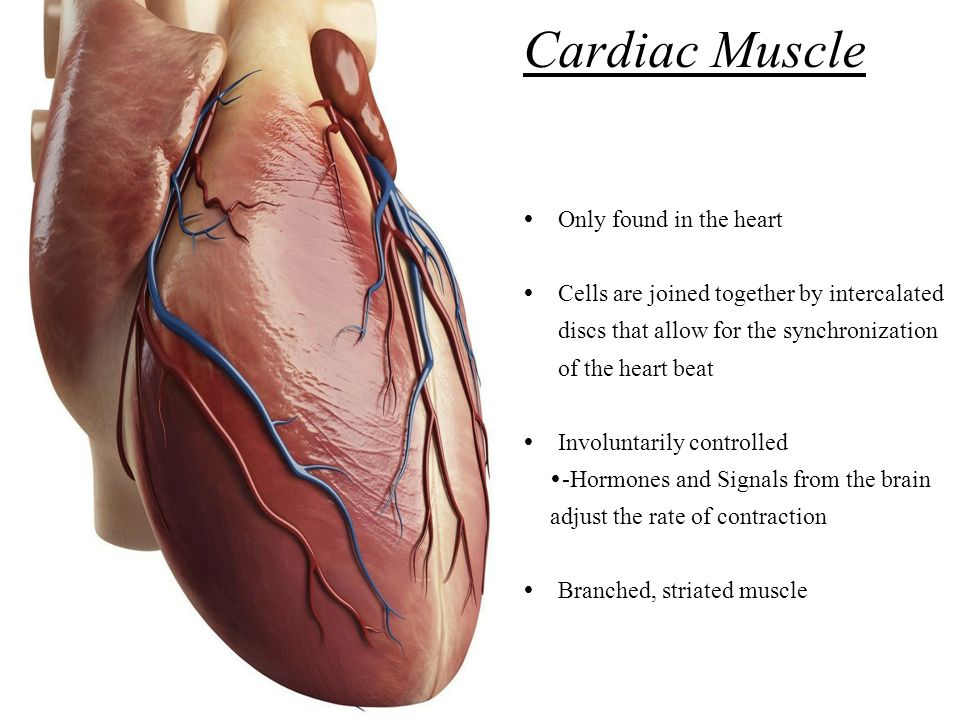 where is a cardiac muscle found