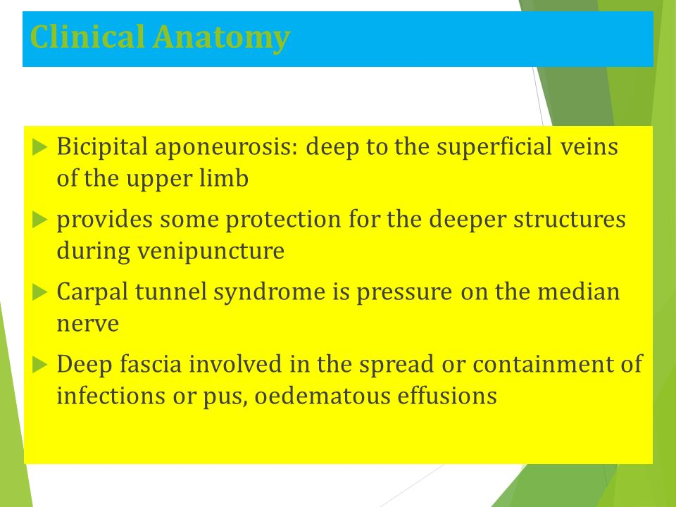 Pectoral Region: Lecture ppt download