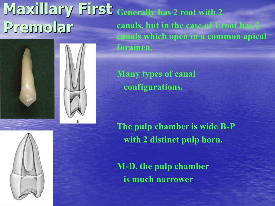 Endodontic Access Cavity Preparation - ppt video online download
