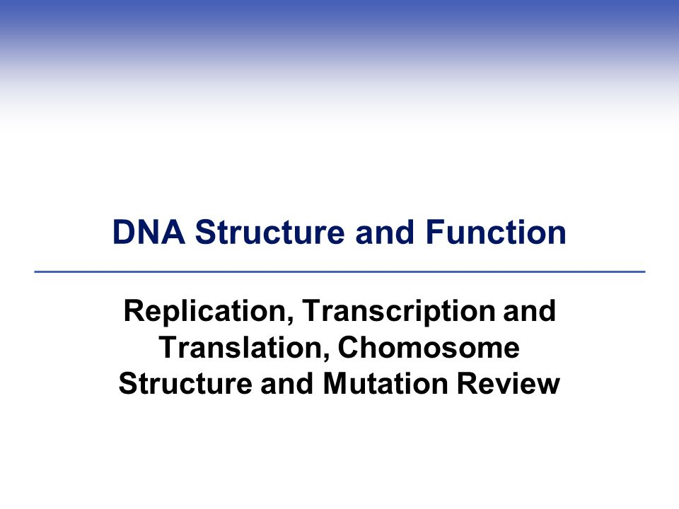 DNA Structure and Function - ppt download