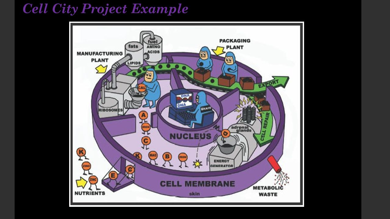 Human cell city diagram diy wiring diagrams cell city project assignment ppt video online download rh slideplayer com human cell diagram and functions human cell diagram quiz ccuart Images