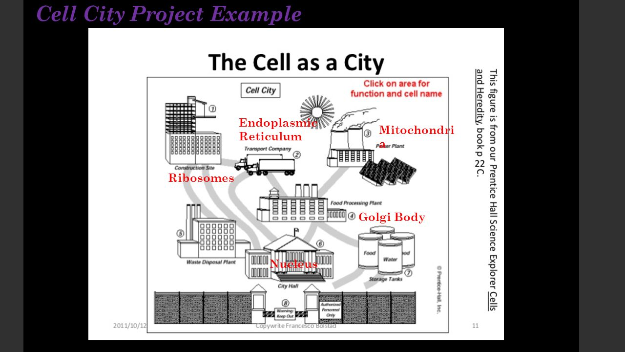 Cell city project assignment ppt video online download cell city project example ccuart Images