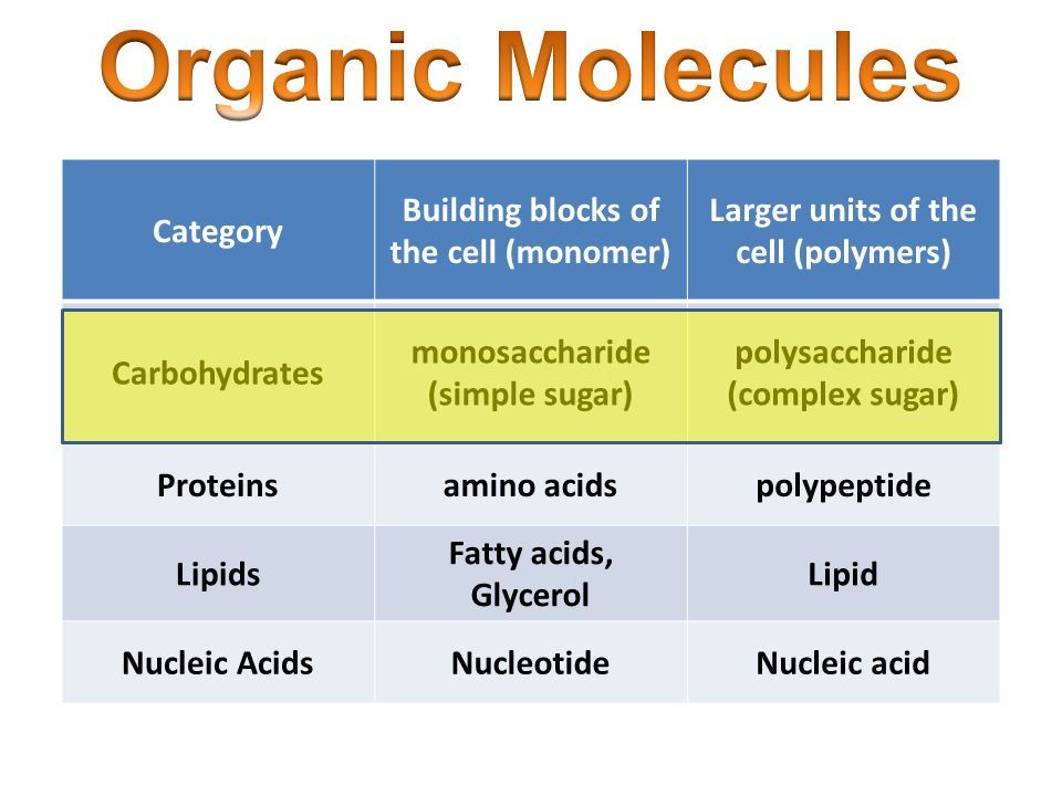 What Is The Monomer Or Building Block Of Proteins