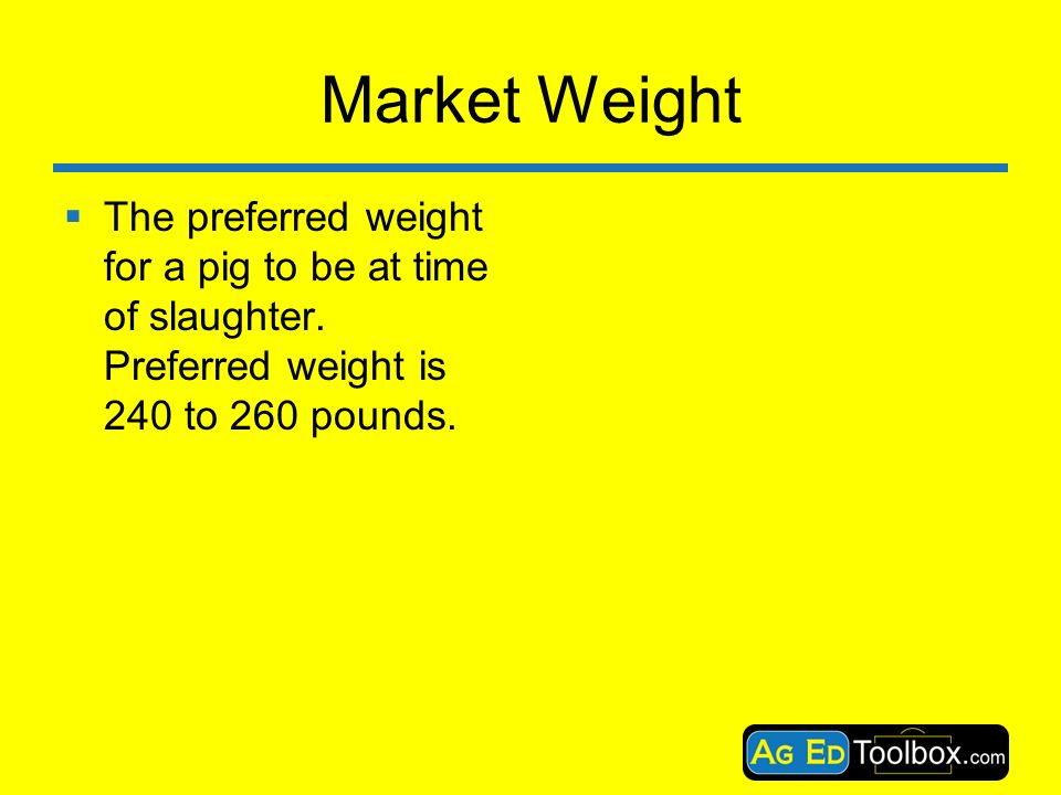Swine Terms  - ppt download