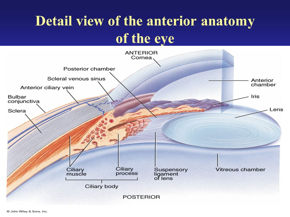 External Anatomy Of The Eye Ppt Video Online Download