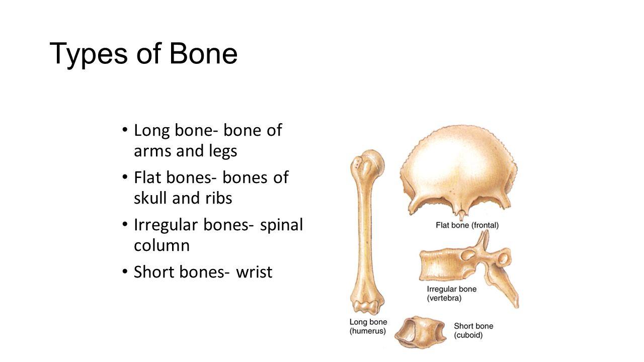 Skeletal System Health Science ppt video online download