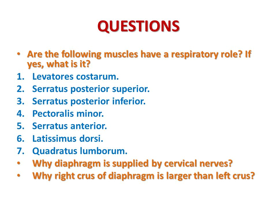 QUESTIONS Are the following muscles have a respiratory role If yes, what is it Levatores costarum.