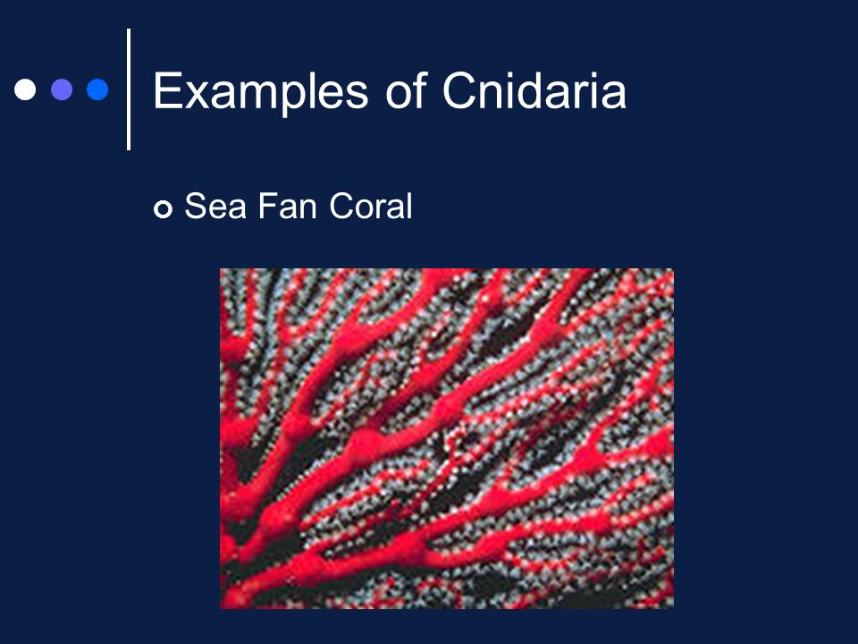 The Marine Biome Cnidaria Ppt Video Online Download