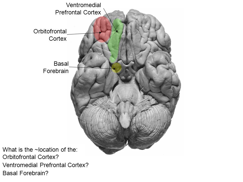 Emotion & Memory Components of the Limbic System - ppt video online ...