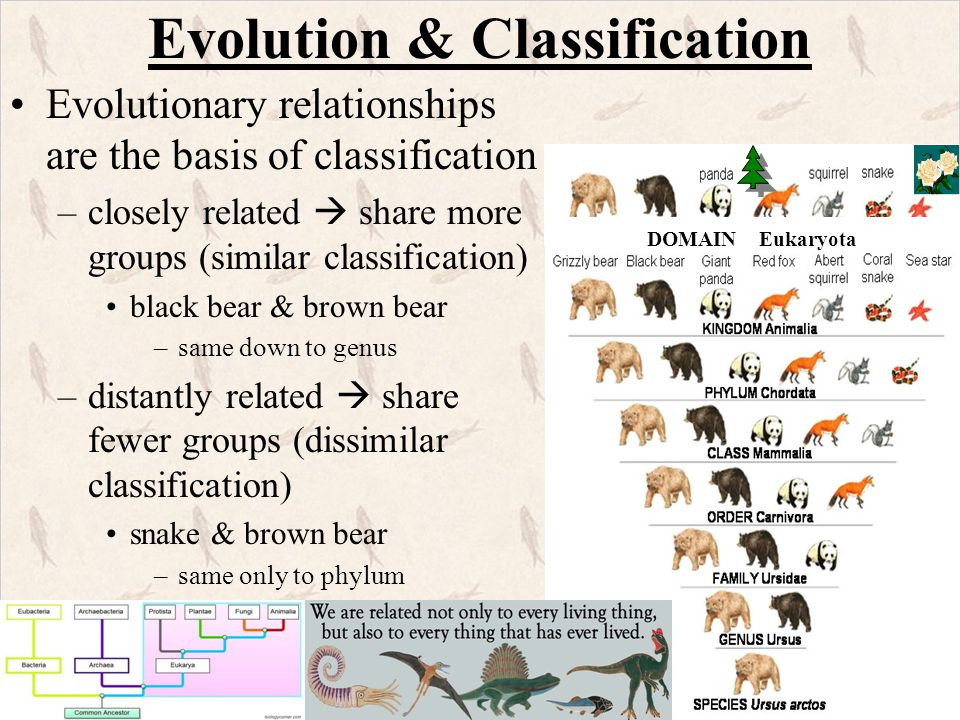 Ch  12 Evolution & Ch  13 Adaptation & Speciation - ppt download