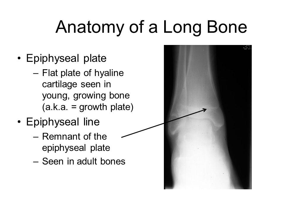 Chapter 5 – The Skeletal System - ppt video online download