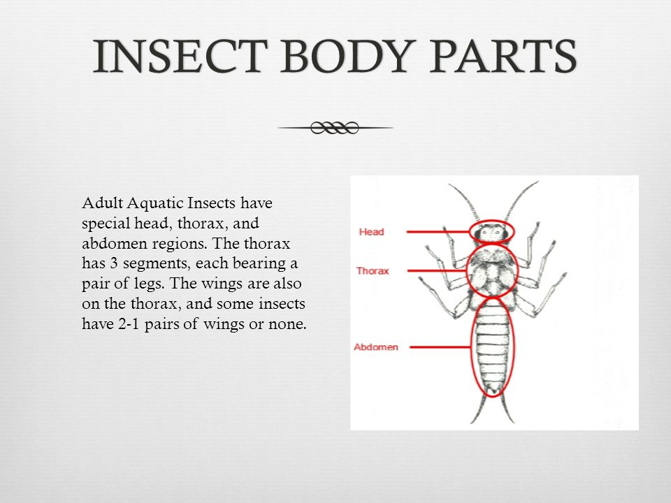 Standing waters insects and molluscs ppt video online download 3 insect ccuart Choice Image