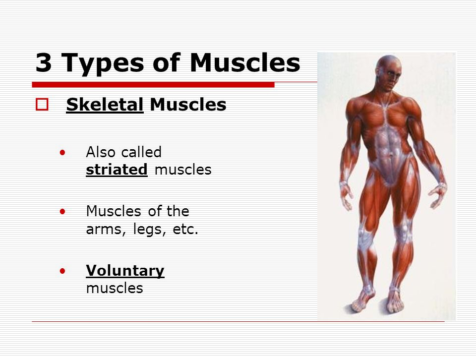 Introduction To Muscles Muscles Of The Skull Neck Ppt Download