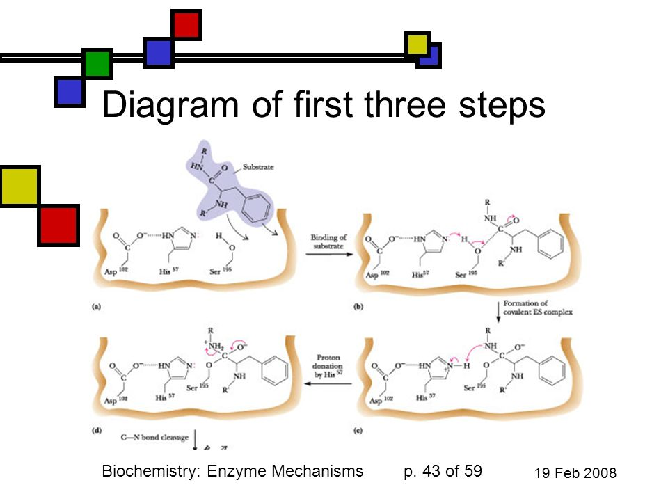 Andy Howard Introductory Biochemistry Spring February Ppt Video