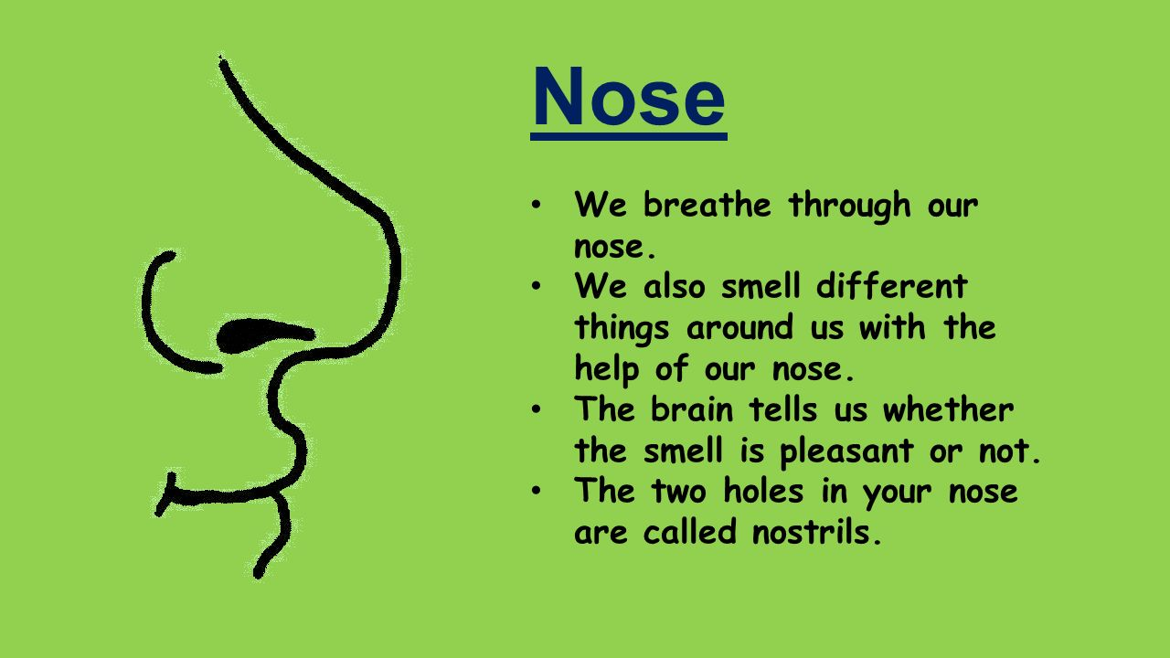 The human sense of smell. Functions of the olfactory organ 84