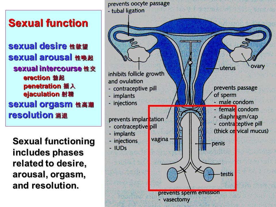 Strumpfhosenmuschi Asiatische Illustration Geschlechtsverkehr Erregung Erektion Penetration