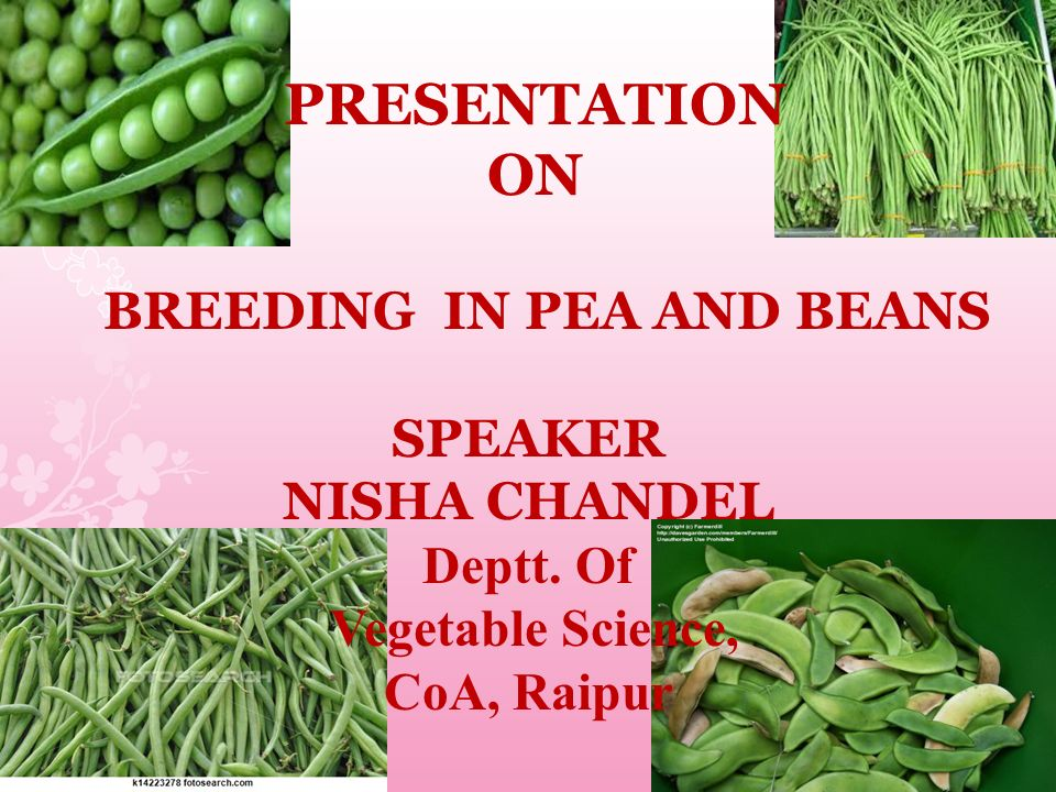 BREEDING IN PEA AND BEANS