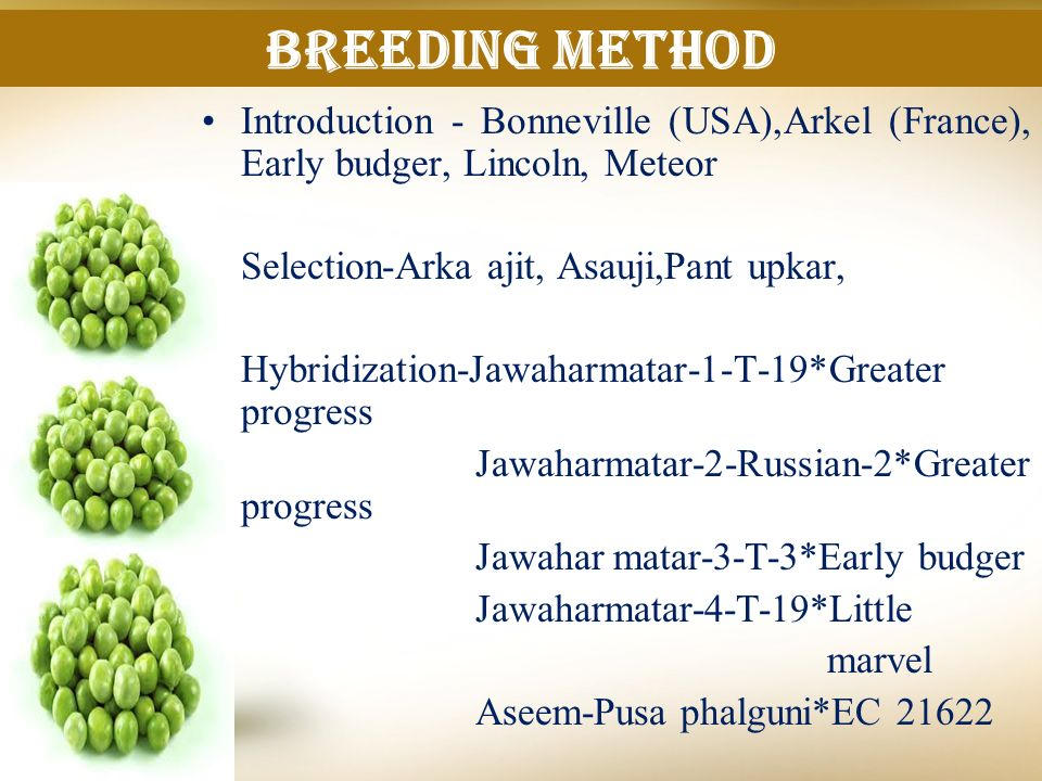 Breeding method Introduction - Bonneville (USA),Arkel (France), Early budger, Lincoln, Meteor. Selection-Arka ajit, Asauji,Pant upkar,