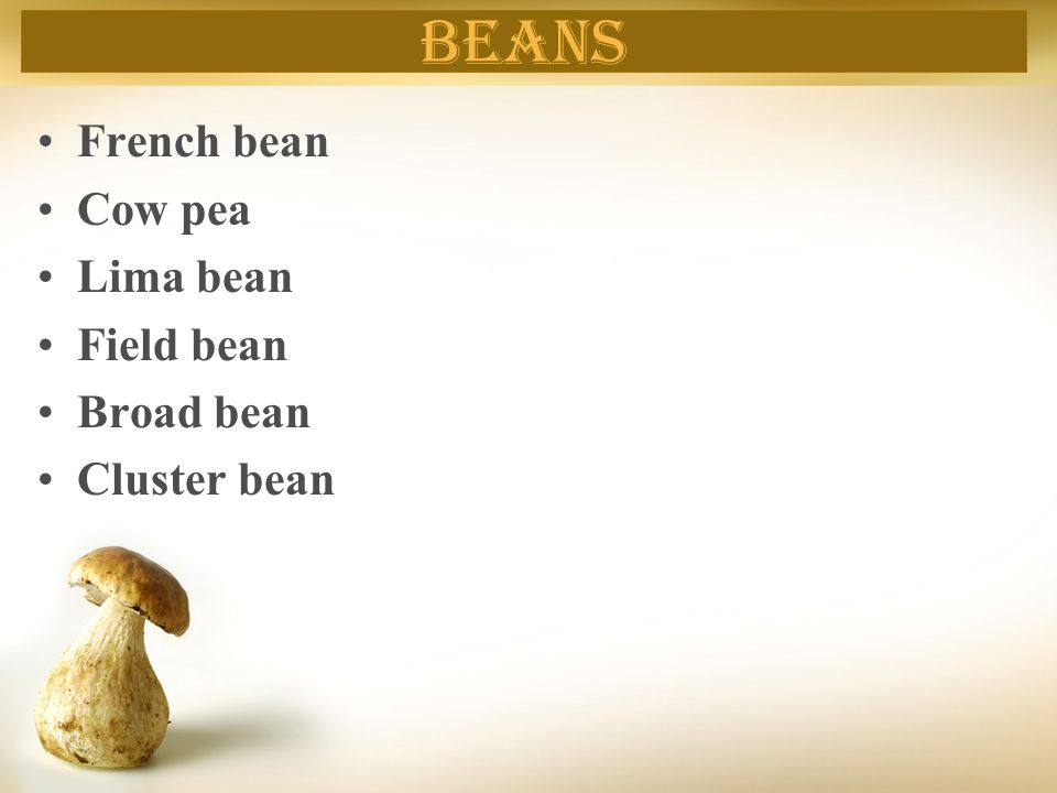 beans French bean Cow pea Lima bean Field bean Broad bean Cluster bean