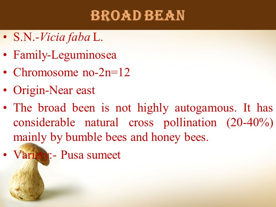 Broad bean S.N.-Vicia faba L. Family-Leguminosea Chromosome no-2n=12