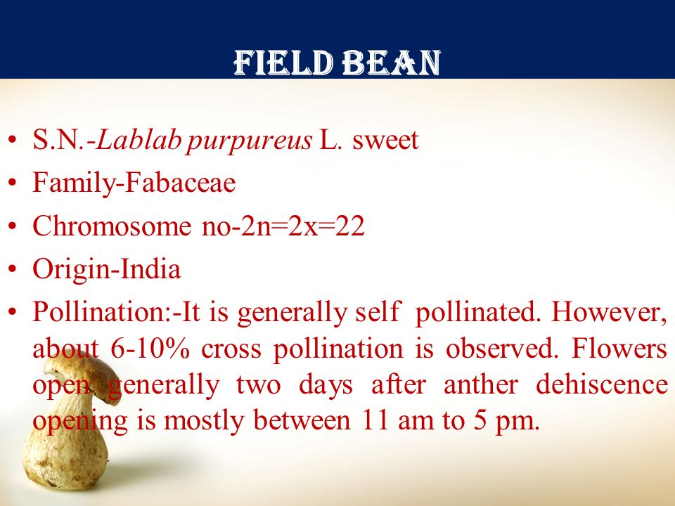 Field bean S.N.-Lablab purpureus L. sweet Family-Fabaceae