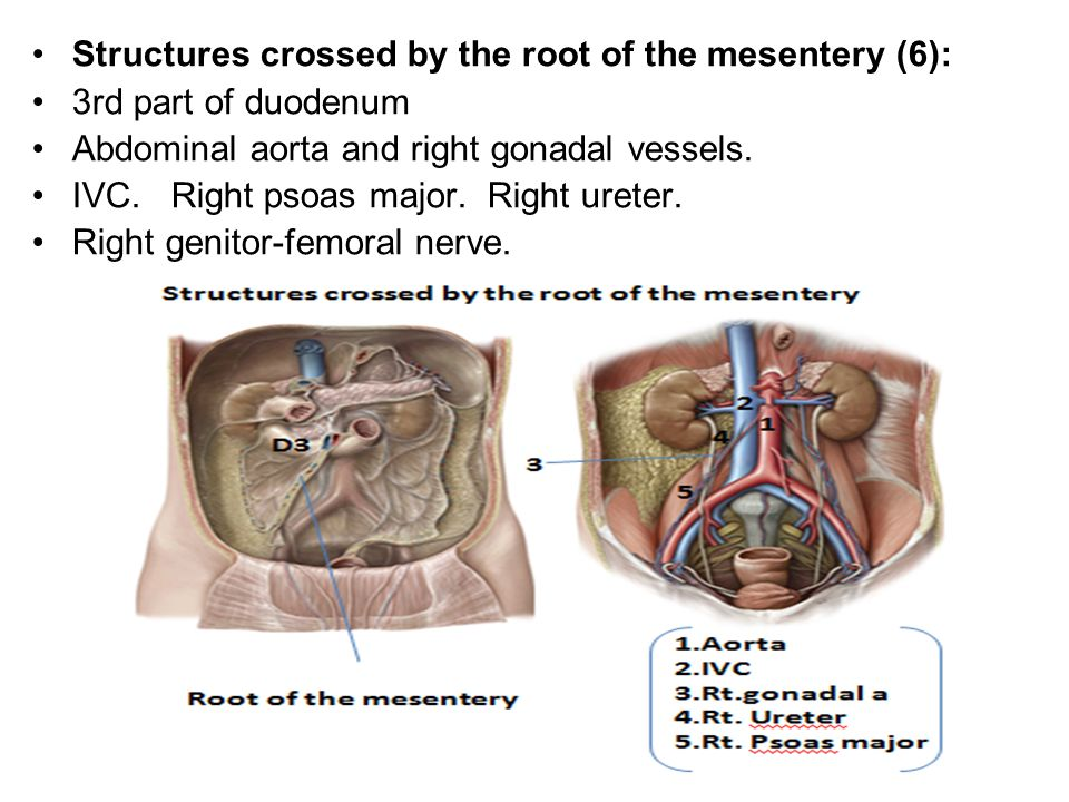 Small Intestine Ppt Video Online Download