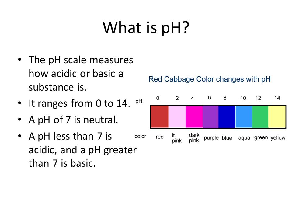 calibration of red cabbage juice indicator Red cabbage: you will also need red cabbage the pigment in red cabbage is known for its ability to change colors depending on the ph (level of acidity) that it comes in contact with the pigment in red cabbage is known for its ability to change colors depending on the ph (level of acidity) that it comes in contact with.