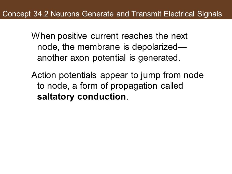 Concept 34.2 Neurons Generate and Transmit Electrical Signals