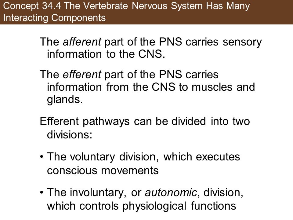 The afferent part of the PNS carries sensory information to the CNS.
