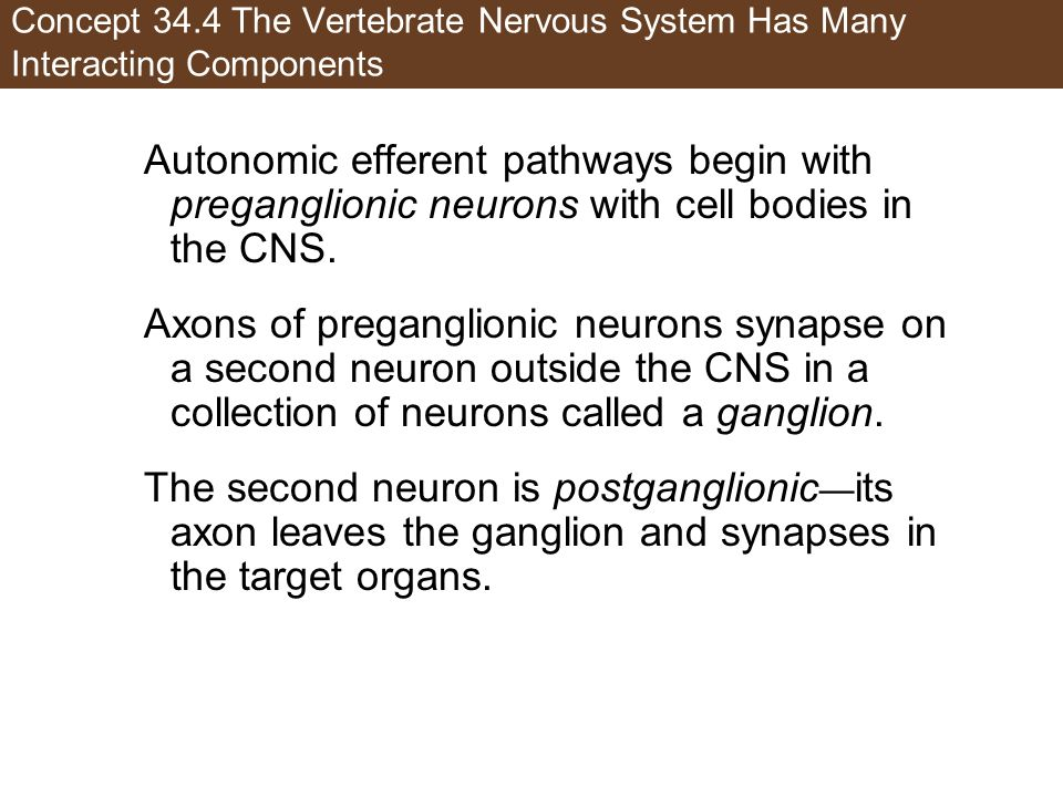 Concept 34.4 The Vertebrate Nervous System Has Many Interacting Components