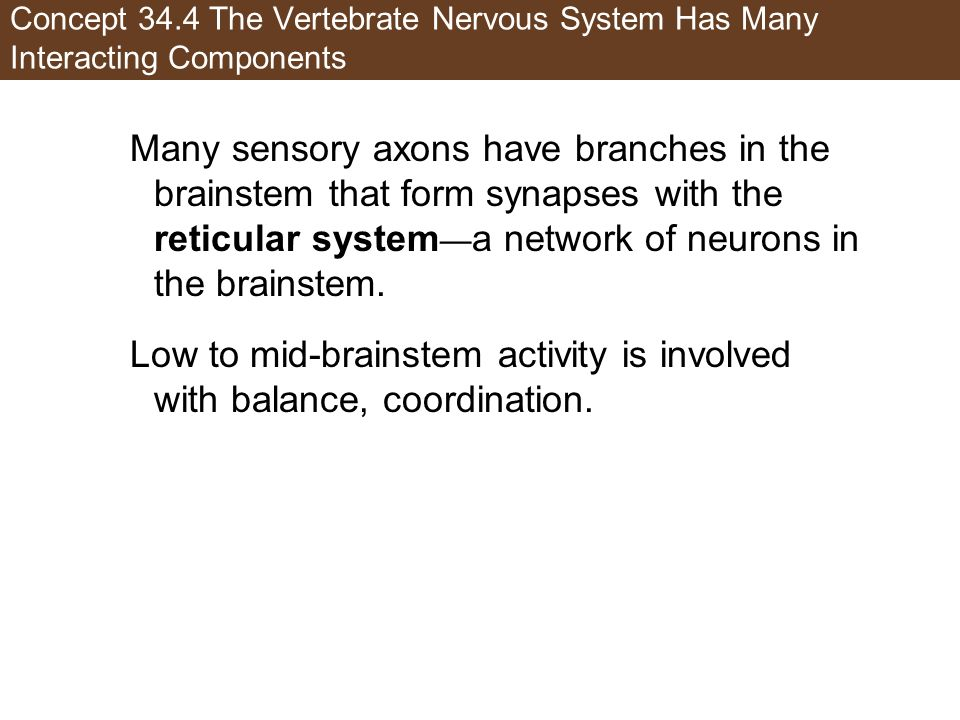 Low to mid-brainstem activity is involved with balance, coordination.