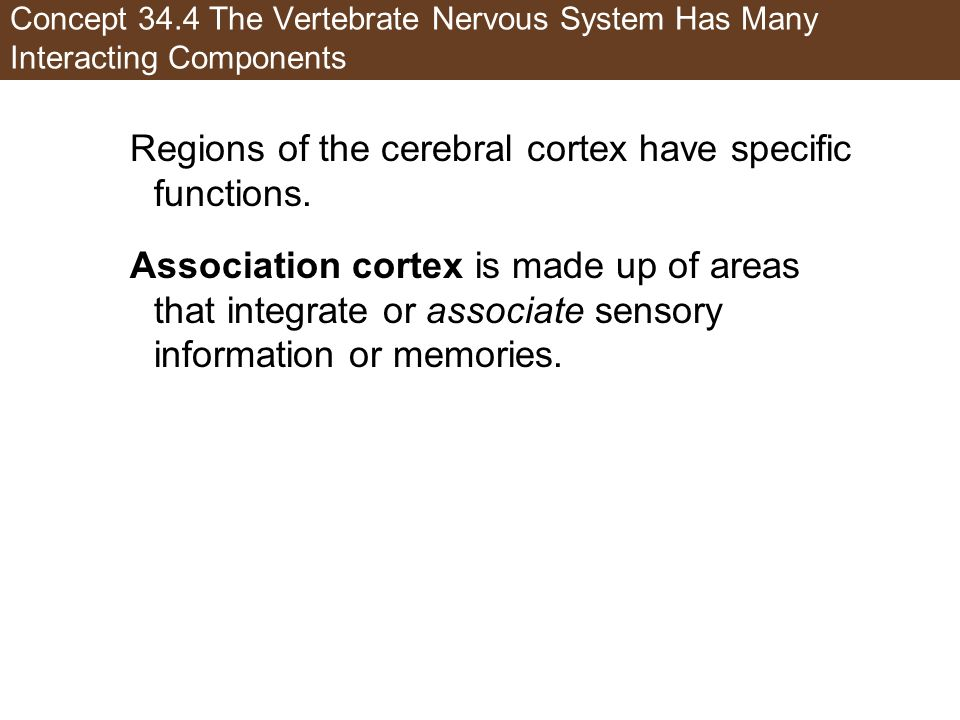 Regions of the cerebral cortex have specific functions.