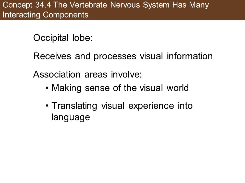 Receives and processes visual information Association areas involve: