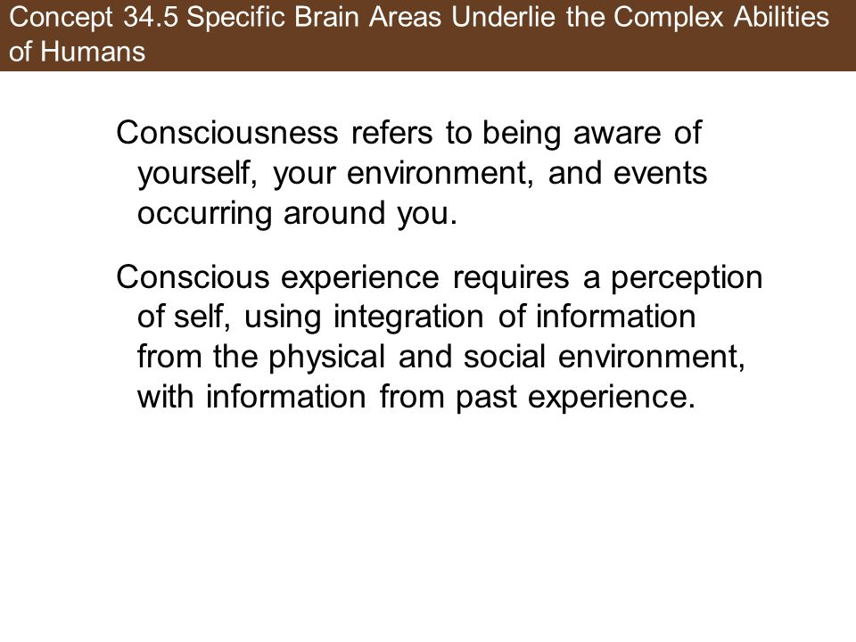 Concept 34.5 Specific Brain Areas Underlie the Complex Abilities of Humans