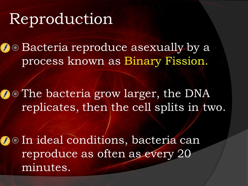 Bacteria reproduce asexually in what process does dna