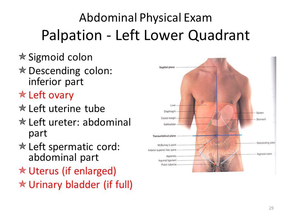 Gastrointestinal examination - ppt video online download