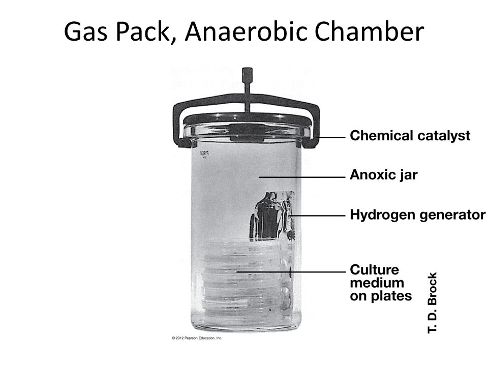 Gas+Pack%2C+Anaerobic+Chamber diagnostic microbiology and immunology ppt video online download