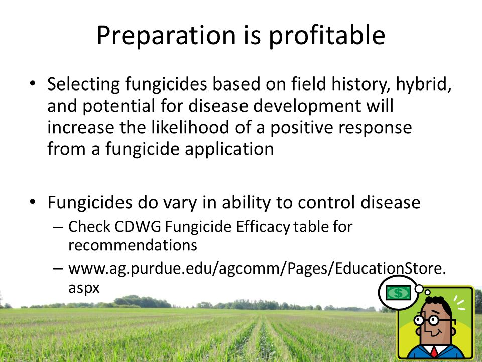 Early and late fungicide applications in corn: What have we