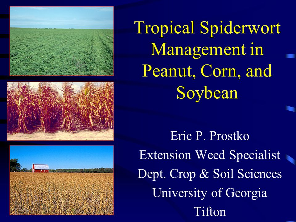 peanut thesis articles row spacing How to cite this article: ihsanullah , fazal hayat taj , habib  msc thesis, agronomy department  effect of row spacing on growth and yield in mung.