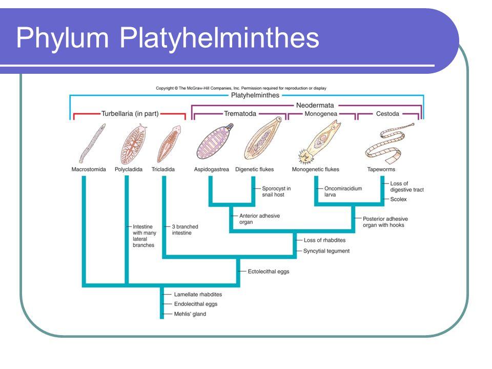 taxonomie phylum platyhelminthes