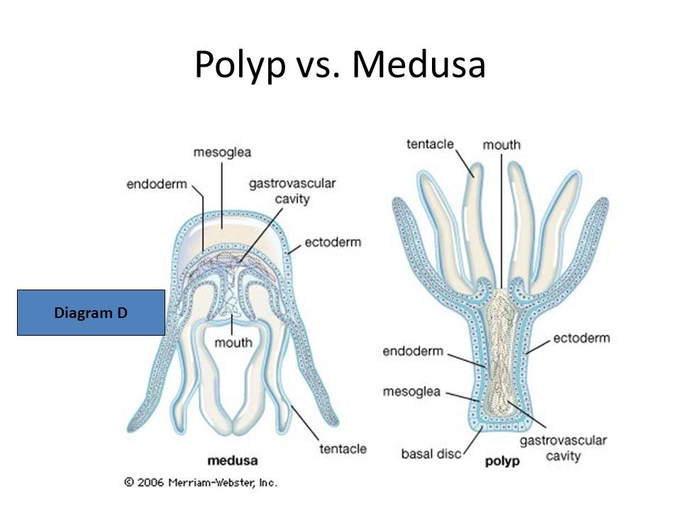 Diagram Of Medusa Body Plan Auto Electrical Wiring Diagram