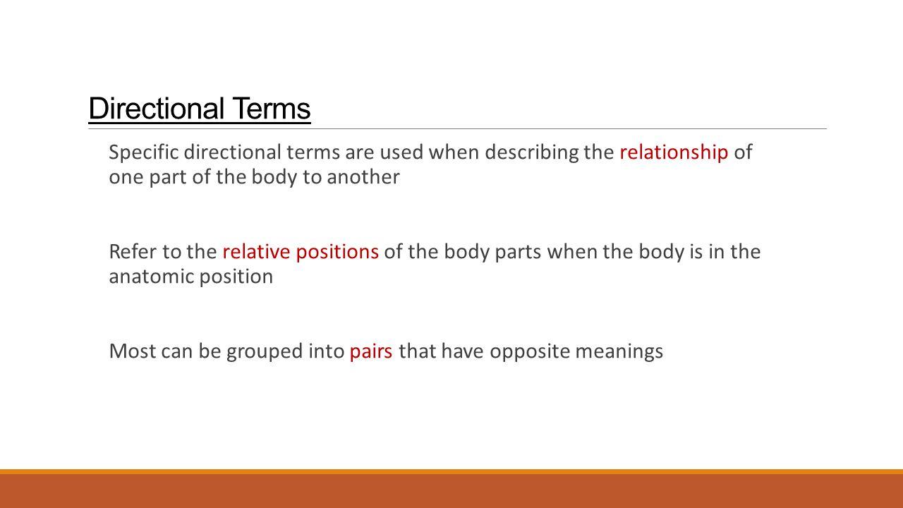 Relative Position Anatomy Gallery - human anatomy diagram organs