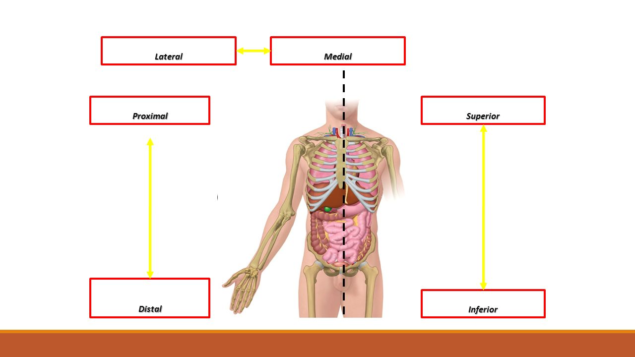 Human Body Anatomy and Physiology HS20-HB1 Analyze the anatomy and ...