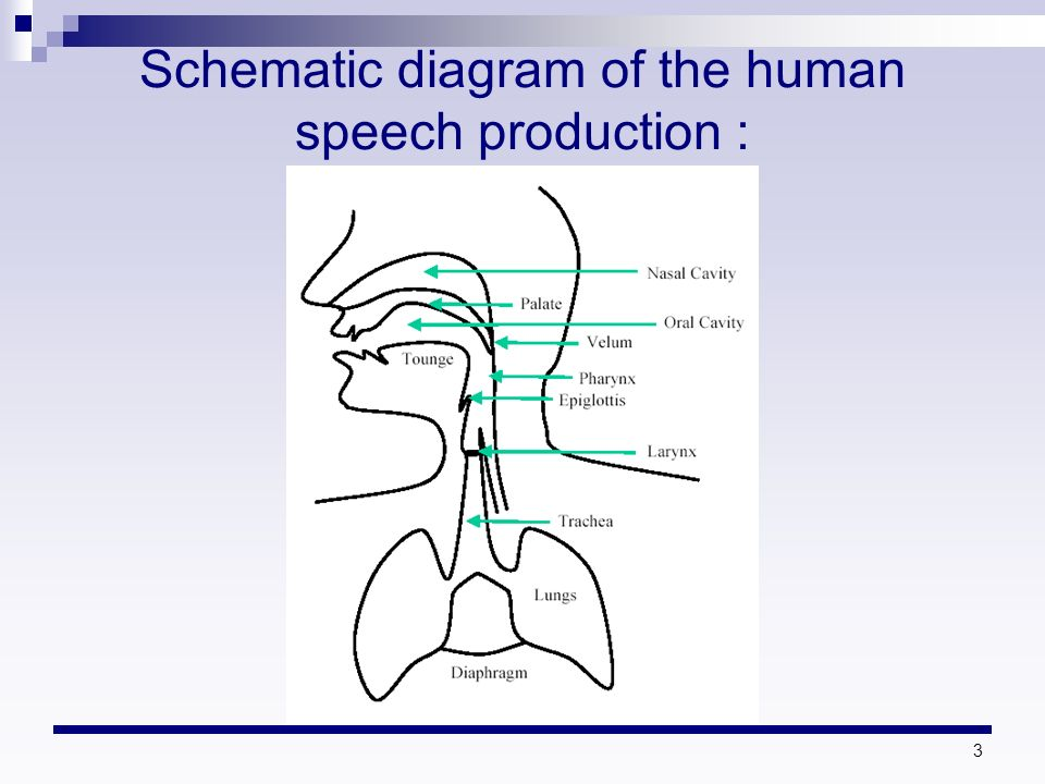 speech learning mechanism Statistical learning is the ability for humans and other animals to extract statistical regularities from the world around them to learn about the environment although statistical learning is now thought to be a generalized learning mechanism, the phenomenon was first identified in human infant language acquisition.