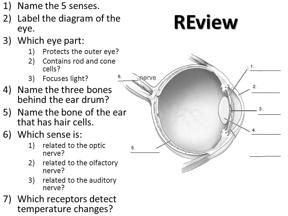 The senses ppt video online download review name the 5 senses label the diagram of the eye ccuart Images