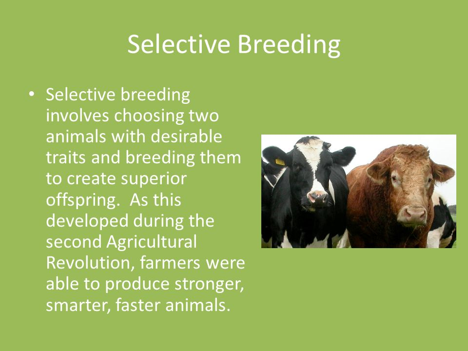 whats selective breeding Selective breeding selective breeding (artificial selection) happens when humans choose animals and crops to breed based on their genetic characteristics humans have done this in farming for thousands of years (with both crops and animals) to promote the genetic characteristics that we view as desirable.