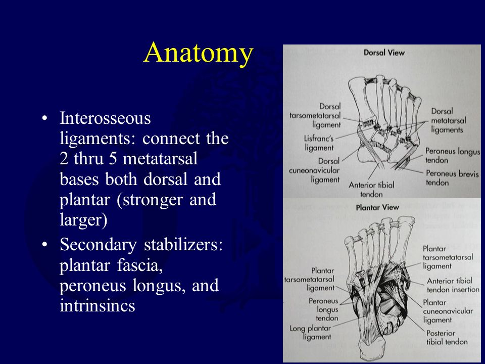 Fractures and Dislocations of the Mid-foot Including Lisfranc ...